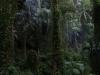 Araponga, 2017, paysage sonore, vidéo HD, son, couleur, 6'25'', sonorisation Olavo Vianna, édition de 5 + 2 EA