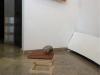 Niveles (Levels), 2017, red and gray raw ceramics, wood, coconut, variable dimensions. This proposal was part of the exhibition Double Trouble, Maison du livre, de l'image et du son, Villeurbanne, France