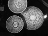 Mene, Mene, Tekel, Upharsin - Bowls, 2015, ceramic bowls, black paint, variable dimensions, unique pieces