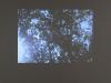 Fleur Noguera, Devonian Levels, 2010, image extraite du film, couleur, muet, 6′, édition de 5, Courtesy galerie Dohyang Lee